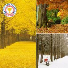Du lịch Hàn Quốc mùa thu vàng trọn gói