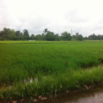 Nền đất nông nghiệp huyện Bình Chánh