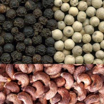 Cung cấp tiêu đen, tiêu sọ, hạt điều vỏ lụa sấy khô giá rẻ