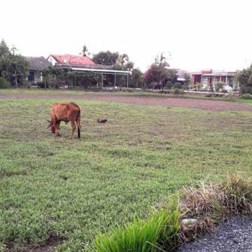 Cần sang 4.600 m2 đất tại Tp.Tân An, Long An