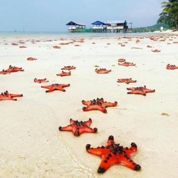Tour Phú Quốc từ TP.HCM dưới 3 triệu đồng câu cá, lặn ngắm san hô