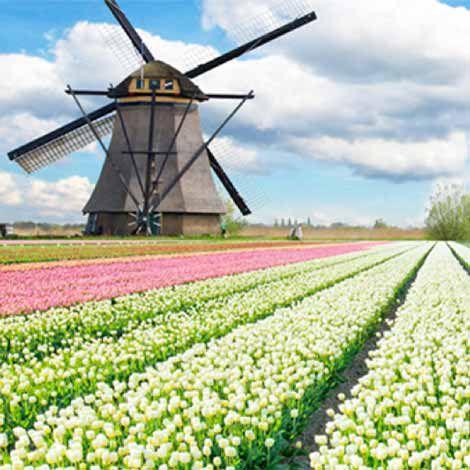 Tour xuân 5 nước - lễ hội hoa xuân tulip Hà Lan