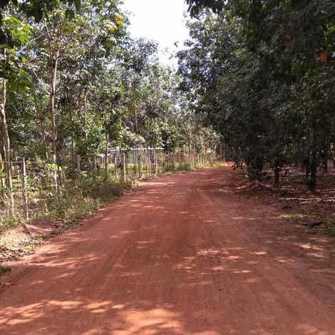 Sang lô đất ở xã Tân Long, Phú Giáo, Bình Dương