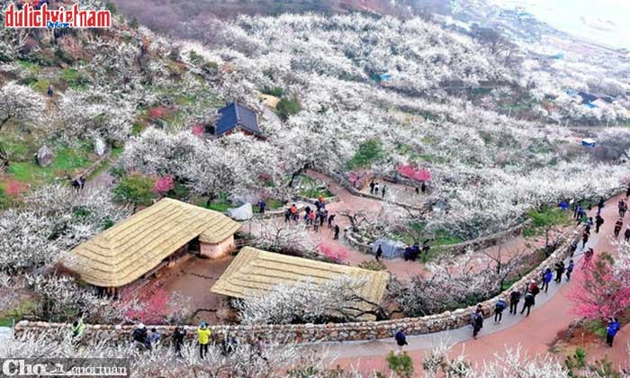 Ưu đãi 3 triệu đồng tour du xuân Hàn Quốc