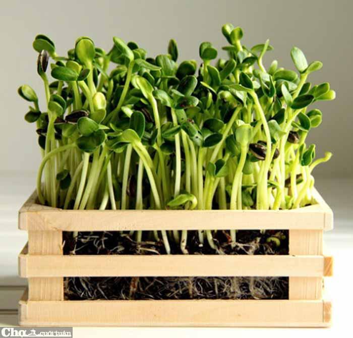 24 mẫu cây xanh để bàn giúp đem lại may mắn